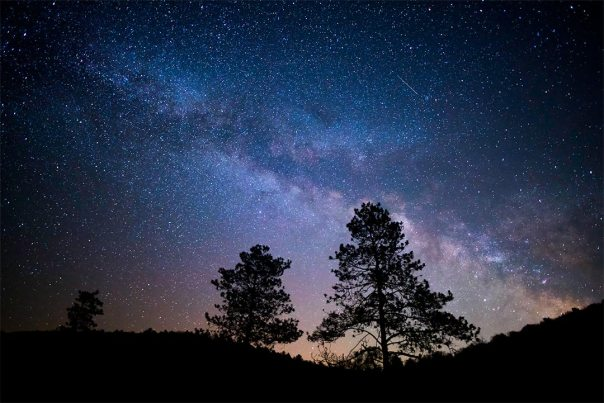 Milky Way Cook Forest