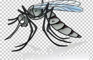Large Gray mosquito